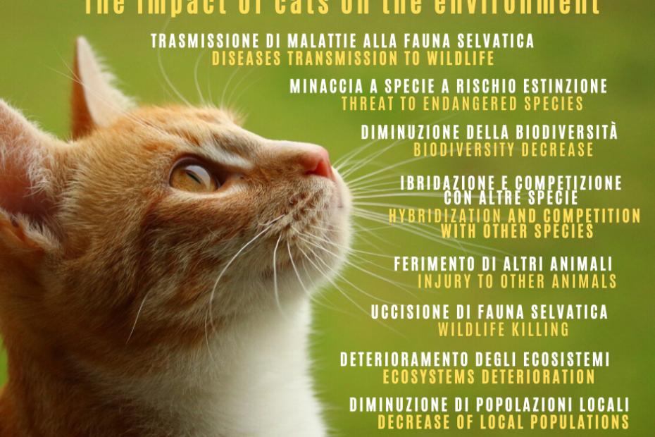 impatto gatto