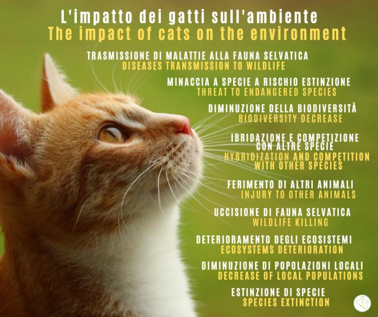 ambiente gatto