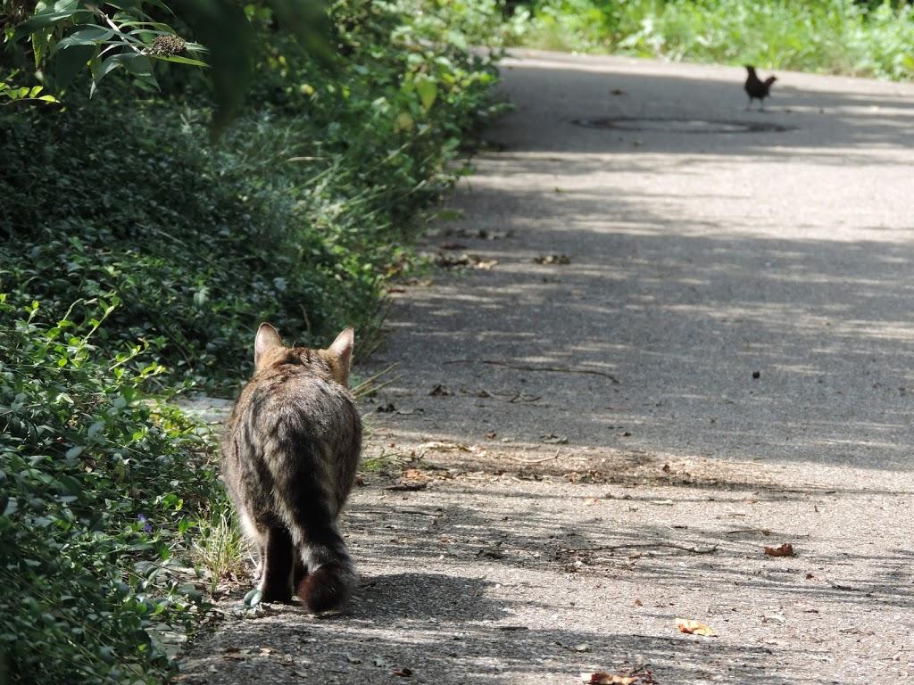 gatto preda