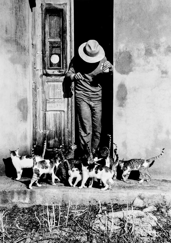 colonia gatti