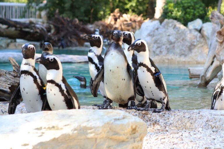pinguini zoo
